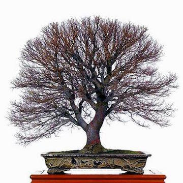 6b-bonsai-nature.jpg